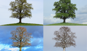 pory roku i miesiące po holendersku